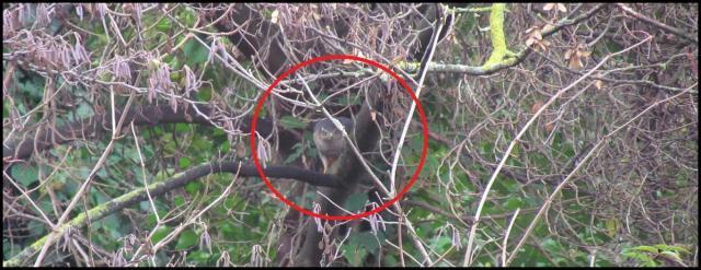 La rapaz era identificada como un gavilán (20-12-2012)