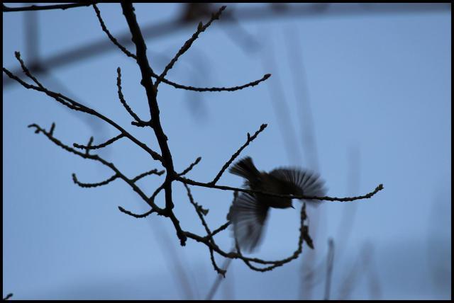 ¿de que ave se trata? (29-1-2013)La solución en la próxima entrada del blog...