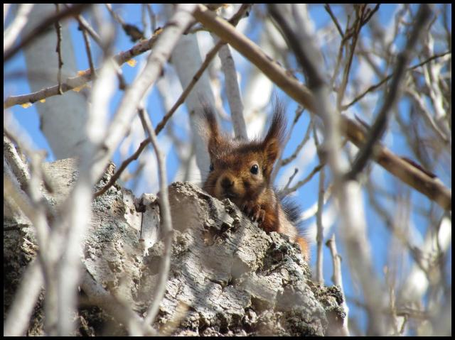 El animalillo no paraba de vigilrame (1-3-2013)