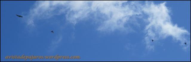 Aviones en vuelo (27-4-2013)