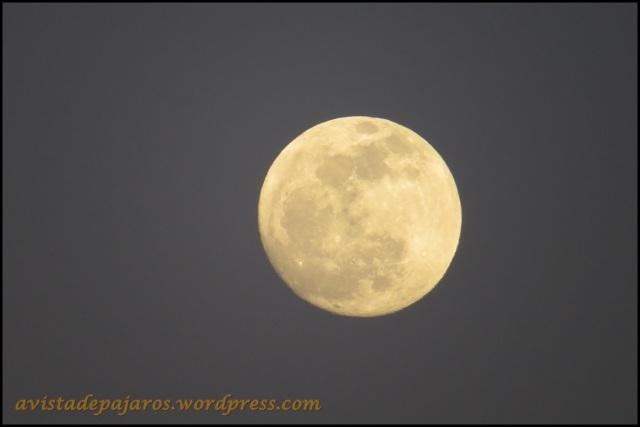 La luna estaba espectacular (24-4-2013)