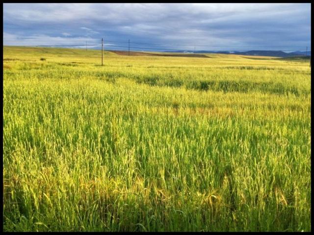 Mares de campos de cereal reinaban en la zona; Julen Gayarre