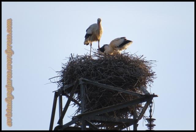El nido (6-6-2013)
