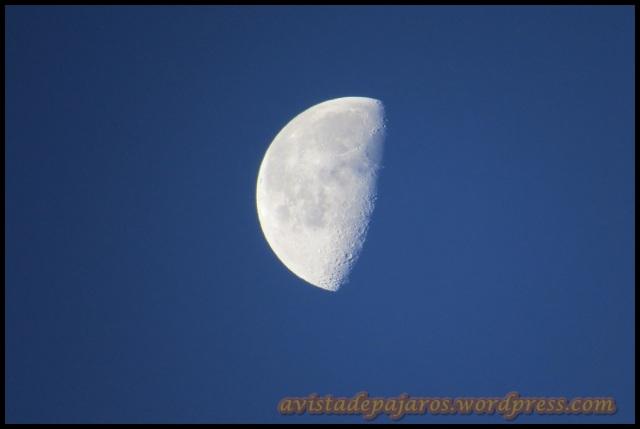 Luna al amanecer (29-6-2013)