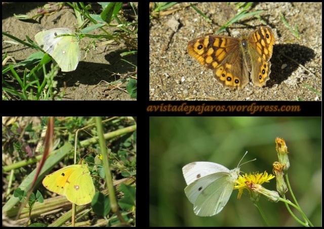 Mariposas (22-6-2013)