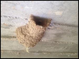 Entrada del nido; Julen Gayarre
