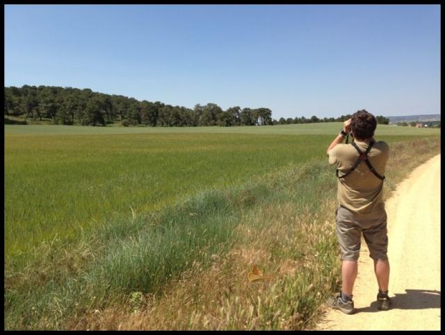 Intentando localizar halcones en vuelo; Itziar Almarcegui (24-6-2013)