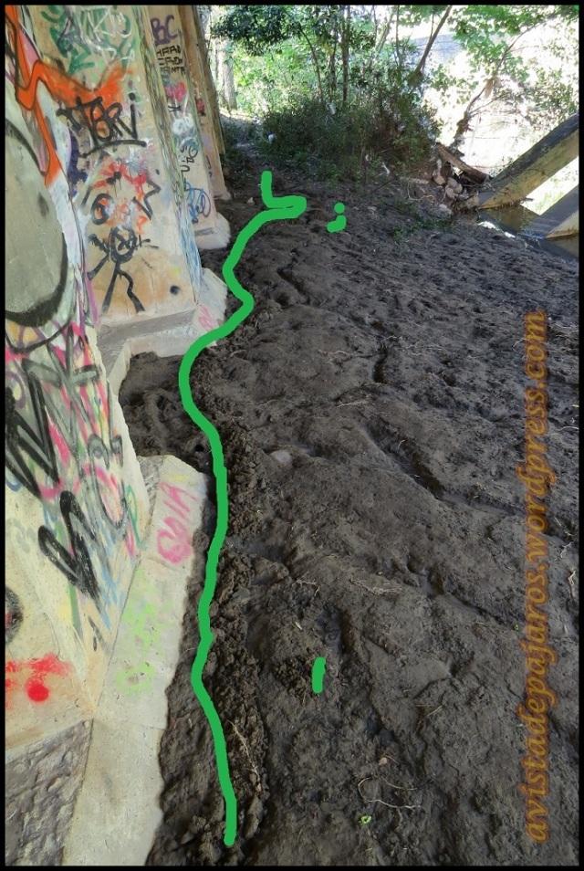 Rastro en el suelo de micromamífero (22-6-2013)