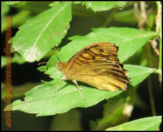 Mariposa (26-7-2013)