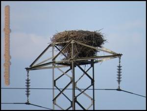 El nido ya ha acabado su labor este año (25-7-2013)