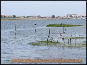 Txingudi, lugar a visitar (2-8-2013)