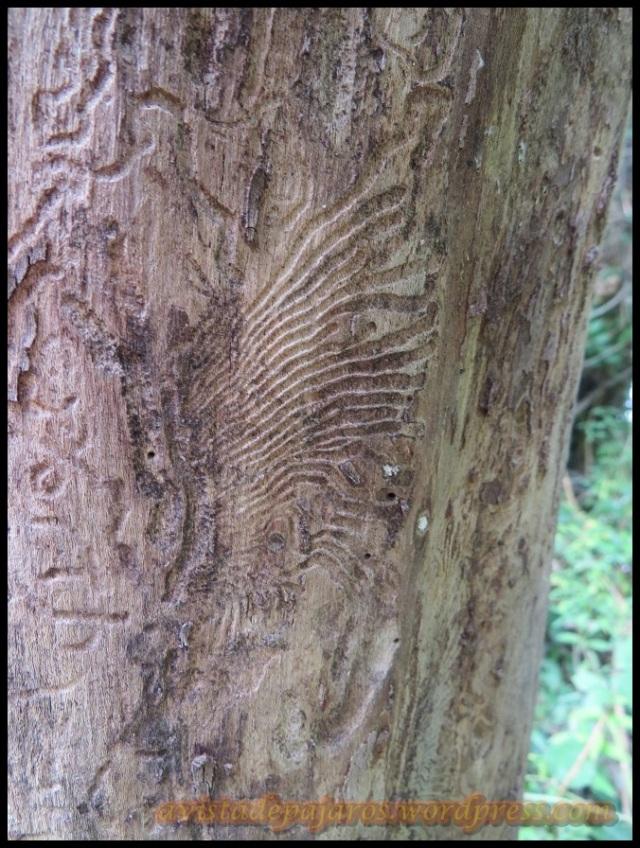 Diferentes marcas de escarabajos (26-8-2013)