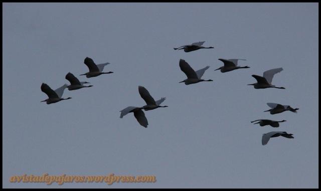 Garcetas en vuelo (11-9-2013)