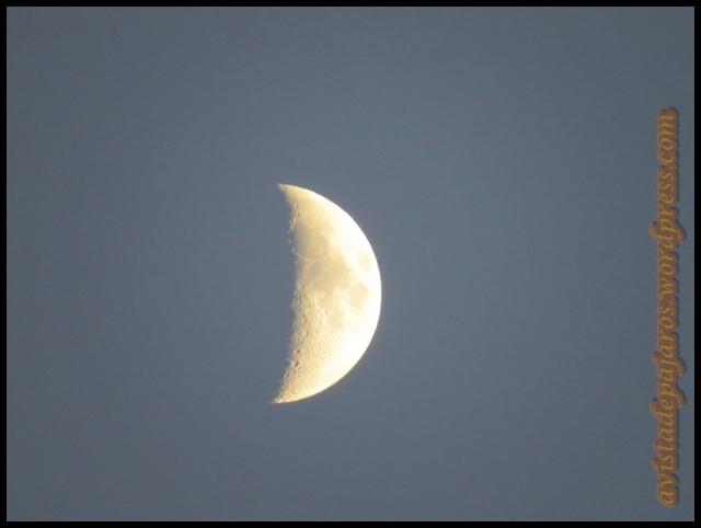 La luna nos acompañaba desde el principio de la jornada (11-9-2013)
