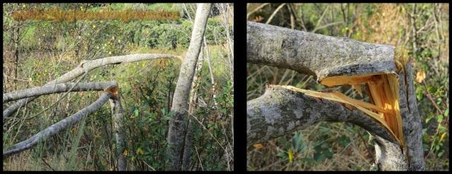 Arbustos rotos (26-9-2013)