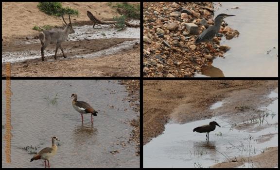 Aves en el agua (31-10-2013)