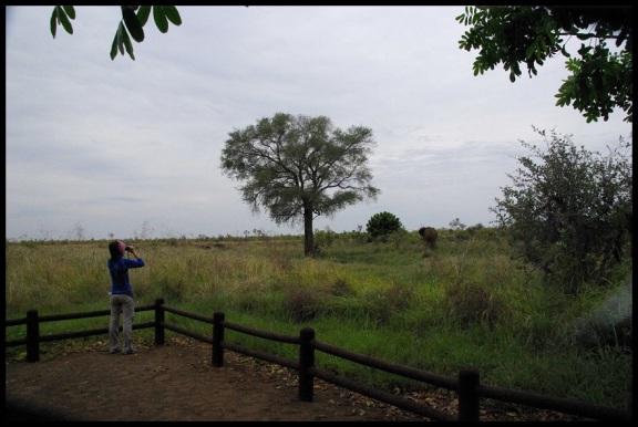 Amaia mirando el elefante; María Martinez (31-10-2013)