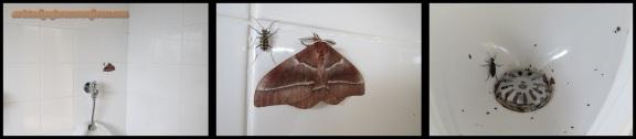 Insectos en el baño (1-11-2013)