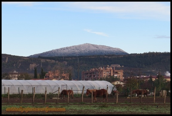 monte Ezkaba nevado (16-11-2013)