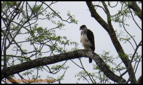 Precios águila (31-10-2013)
