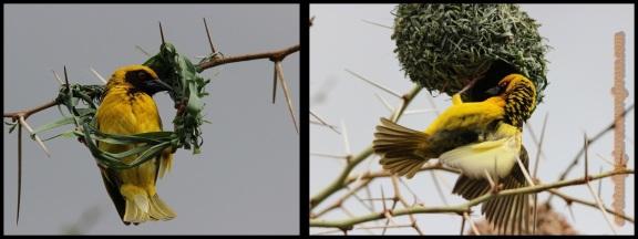 Realizando los nidos (29-10-2013)