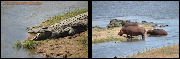 Cocodrilo e hipopótamos (3-11-2013)