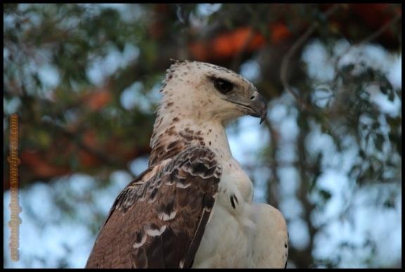 Retrato del águila (5-11-2013)