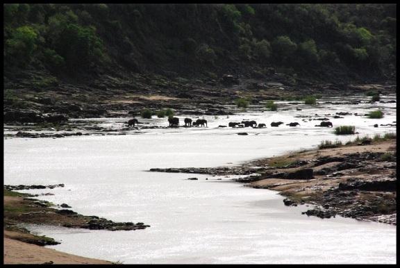 Elefantes cruzando el río; María Martínez (3-11-2013)
