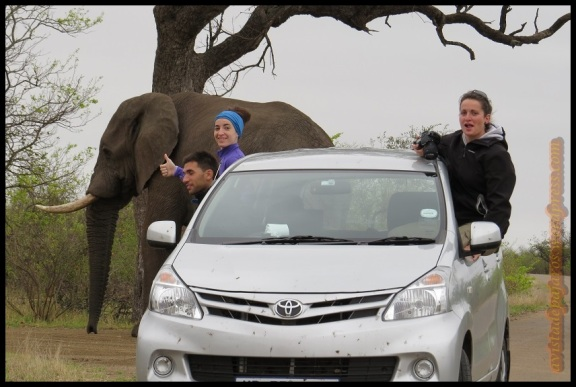 En muchas ocasiones, la fauna cruzaba la carretera a nuestro lado (2-11-2013)