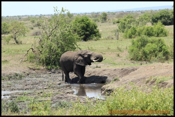 Elefante en el barro (4-11-2013)