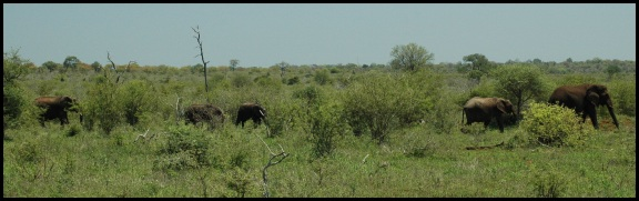 Elefantes en procesión; Koldo Azedo (5-11-2013)