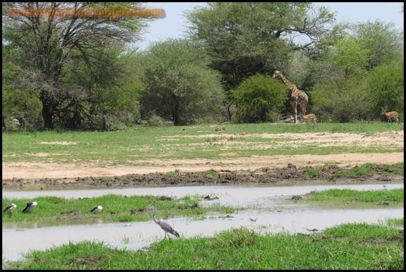 Humedal con varias especies (5-11-2013)