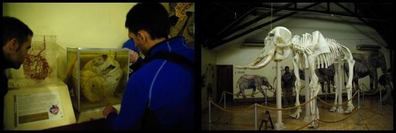 Corazón y esqueleto de elefante; María Martínez (2-11-2013)