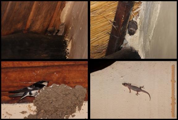 Fauna en el campamento (5-11-2013)