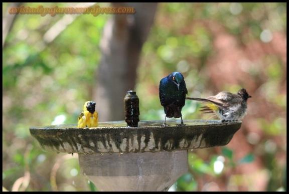 Aves en la fuente del campamento (5-11-2013)
