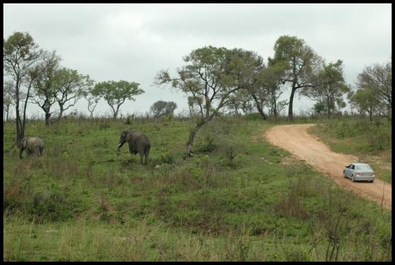 Elefantes en la pista; Koldo Acedo (8-11-2013)