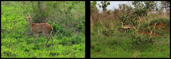 Diferente fauna entre hierbas; María Martínez (6-11-2013)