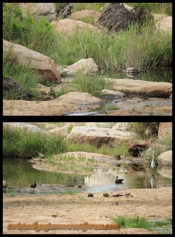 Zonas de río (7-11-2013)