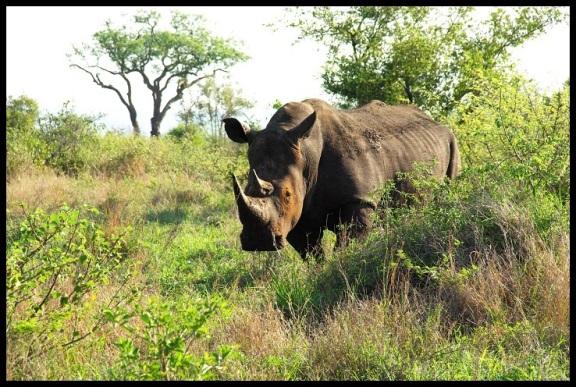 Rinoceronte; María Martínez (6-11-2013)