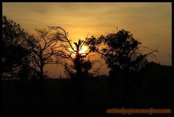 Amanecer en el Kruger (9-11-2013)