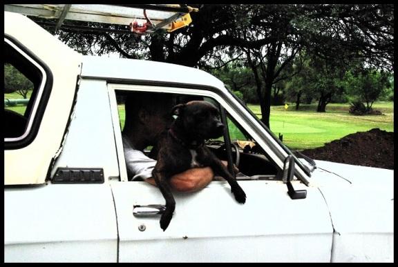 Con el perro en el asiento del piloto; MAría MArtínez (10-11-2013)