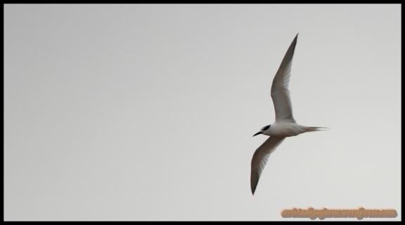 Charran volando (3-2-2014)