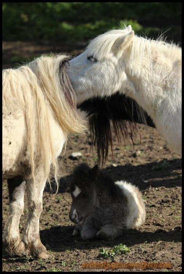 Pony pequeño en la sombra (27-4-2014)