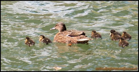 Hembra con las crías (8-4-2014)