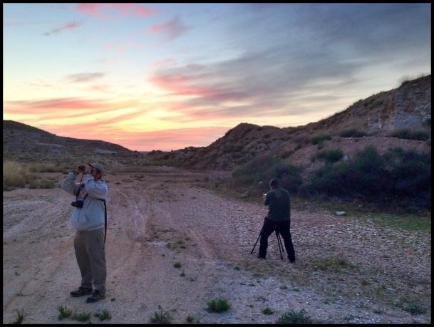 Buscando especies; Itziar Almarcegui (10-5-2014)