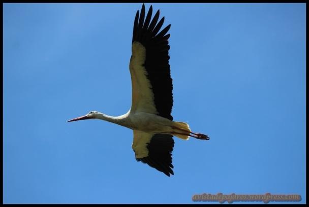 En pleno vuelo (18-5-2014)