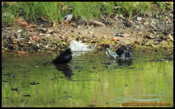 En pleno baño (18-5-2014)