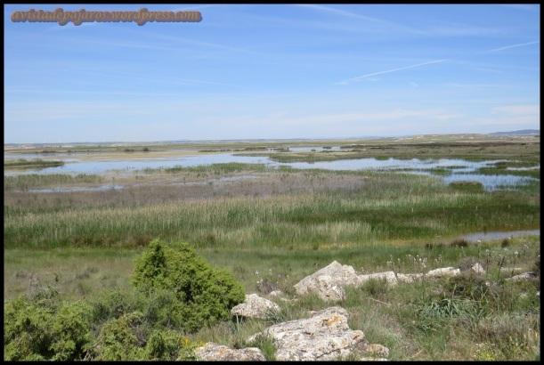 Laguna de Pitillas (10-5-2014)