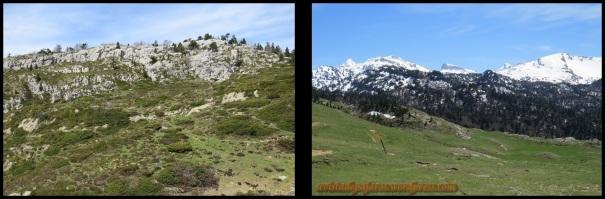 Pastizales de alta montaña