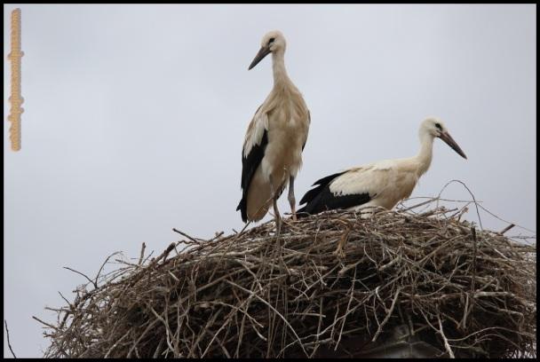 Pequeños en el nido (28-6-2014)